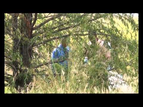 Decomposing body found behind cemetery (not for sensitive viewers)