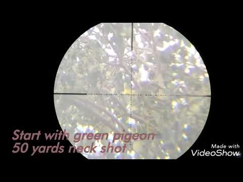 Long range Hunting pigeons ... with p15 ... 50 to 112 yards slow motion