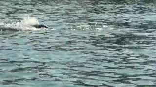 Дельфины на пляже