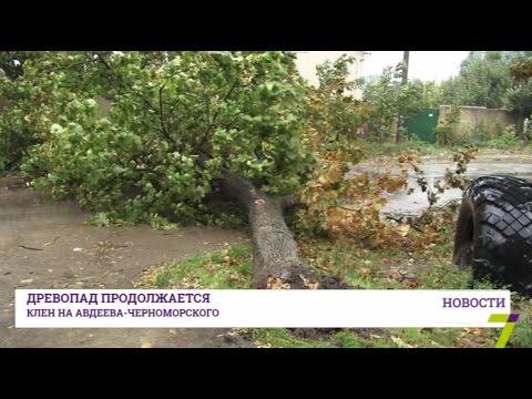 На Большом Фонтане упавшее дерево перекрыло улицу