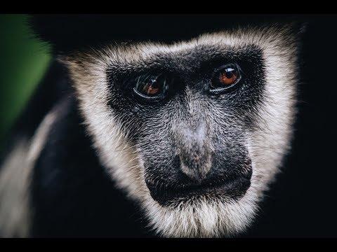 Staying with Colobus monkeys || KENYA DAY 5