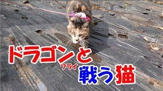 猫がお散歩中に見つけた空飛ぶかわいいドラゴン、とんぼとの面白い戦い...