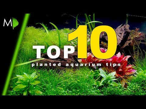 top-10-planted-aquarium-tips