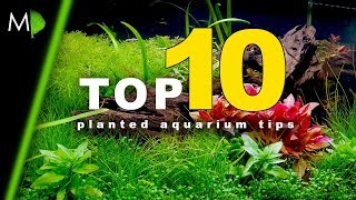 Top 10 Planted Aquarium Tips