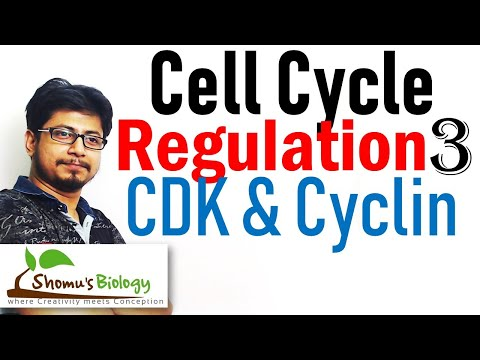 Cyclin and cyclin dependent kinases (cdk) | Cell cycle regulation lecture 3