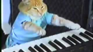 Keyboard cat: Michael Jackson