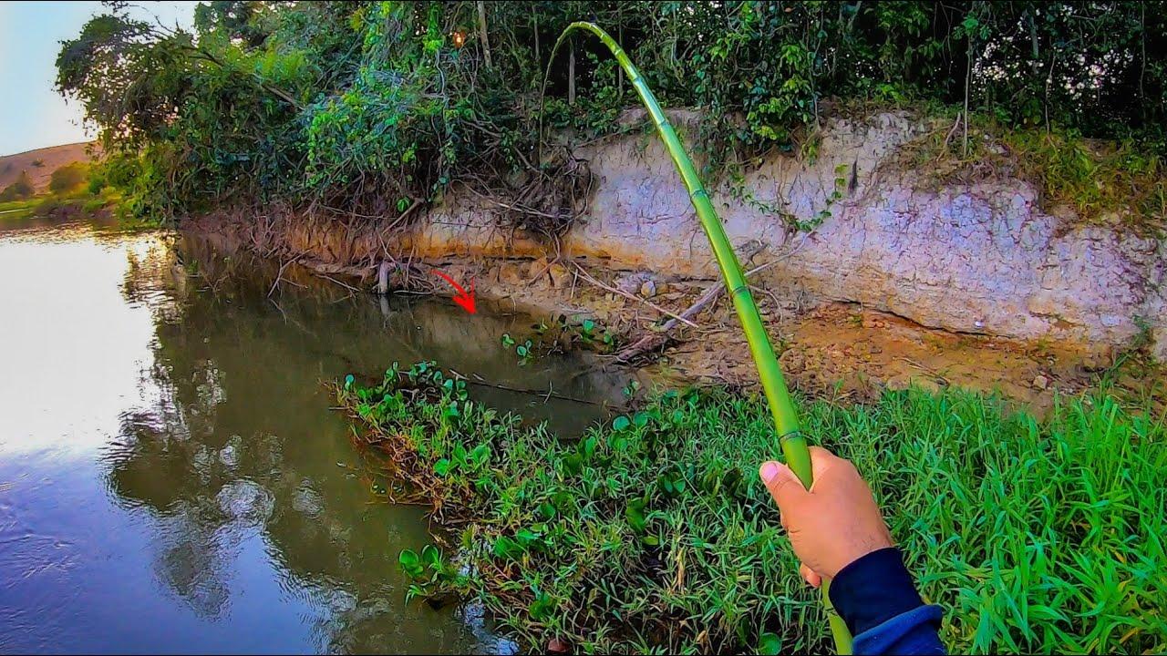 ISCA VIVA MILAGROSA, MELHOR E MAIS EFICIENTE NÃO EXISTE. Pescaria!