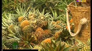 Pineapple Garden Srimongol..