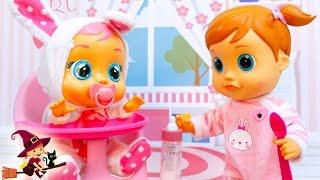 Peke Baby Emma Juega con su Hermanita Coney thumbnail