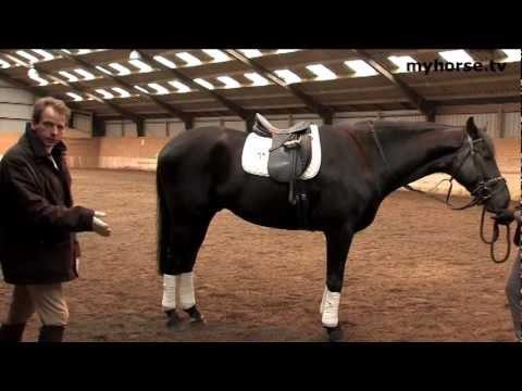 Basic Training - Part C - The Body Of The Horse II