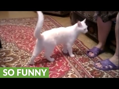 Cat hates owner's mom, repeatedly attacks her