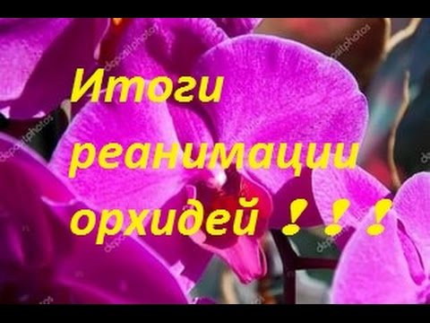 Уход за орхидеей в -