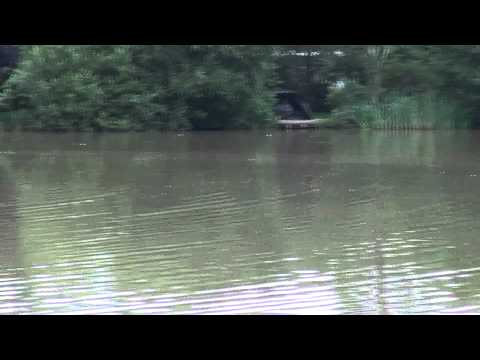 WINTONS FISHERY, BURGESS HILL, WEST SUSSEX