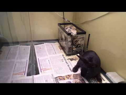 Boa Eats Rabbit