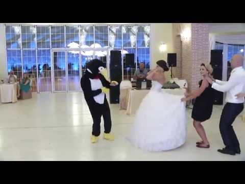 La danse du pingouin - Pinguin dance [HD]