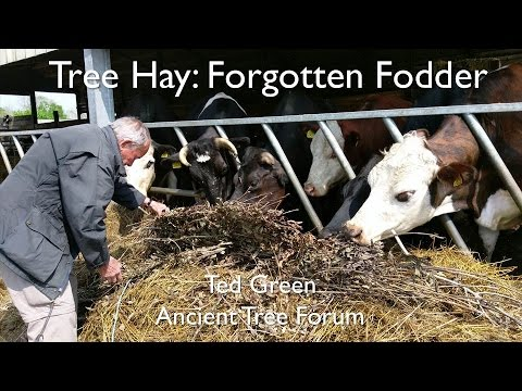 Tree Hay: A forgotten fodder