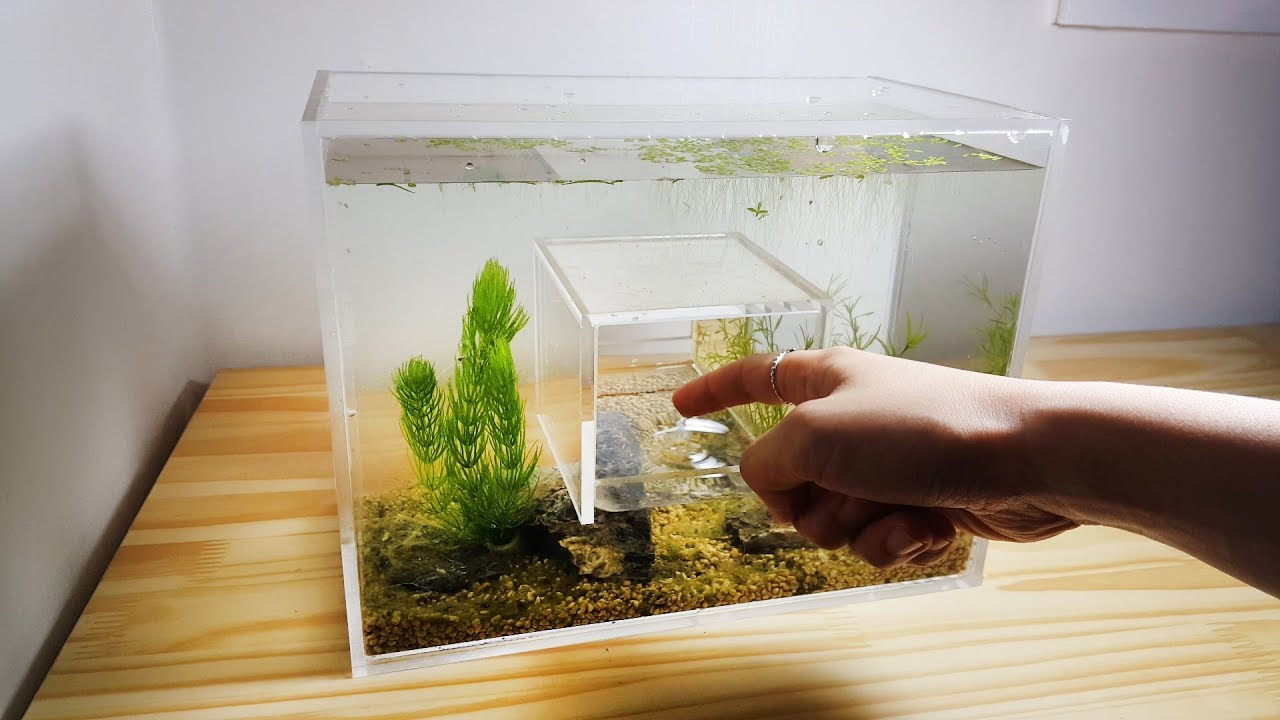 how-to-make-hole-in-the-middle-acrylic-aquarium-nano-pico