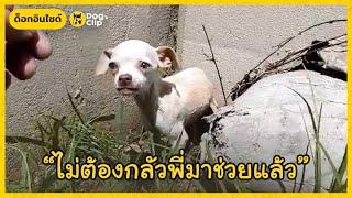 หนุ่มช่วยน้องหมาชิวาวาน้อยผอมโซถูกทิ้งข้างถนน | Dog's Clip