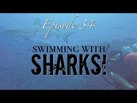 [Ep 34] Swimming with Sharks in the Tuamotus! [Sailing Zatara]