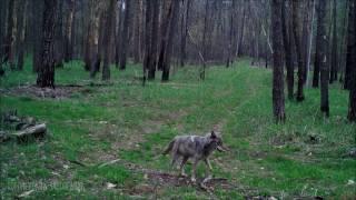 Звери лесные
