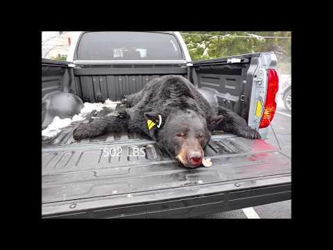 2018 Pennsylvania Black Bear Season Weigh In