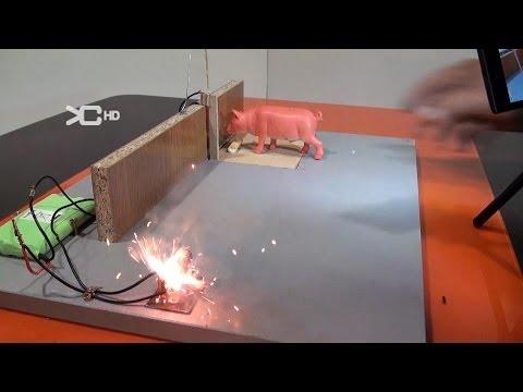 Trampa para ratas grandes funnydog tv - Trampas para cazar ratas ...