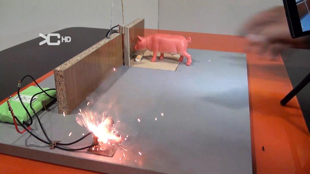 Cazar rata con un petardo experimentos caseros youtube - Cepos para ratones ...