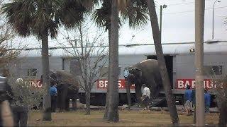 CSX Circus Train Unloads Horses And Elephants Tampa Florida