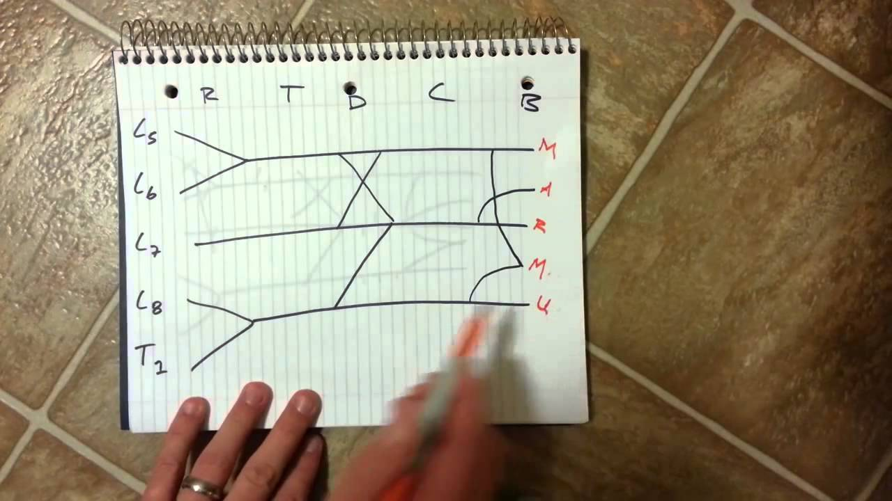 Brachial plexus how to draw it well in less than 20 seconds youtube pooptronica