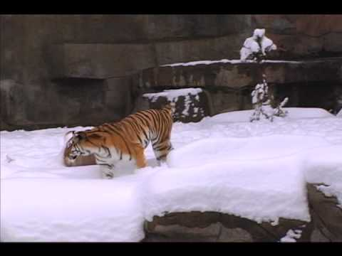 Snow Day at Brookfield Zoo