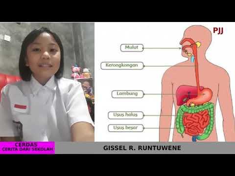 PJJ - Presentasi Siswa tentang Organ dan Fungsi Pencernaan pada Manusia