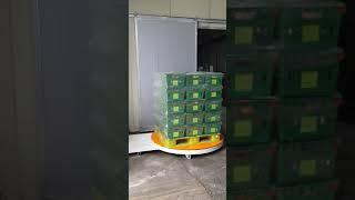 파렛트랩핑기 농산물 보우팩포장기계 010-9053-12…