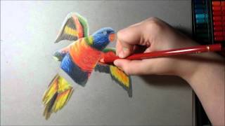 Speed Draw - Rainbow Lorikeet/ Faber Castell Polychromos