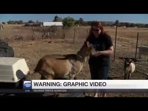 Pets & Livestock shot & killed in southern Butte County