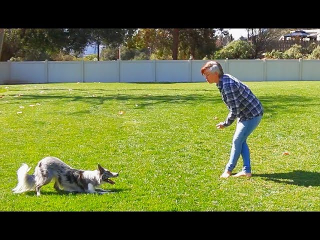 Section of routine - Dog Tricks