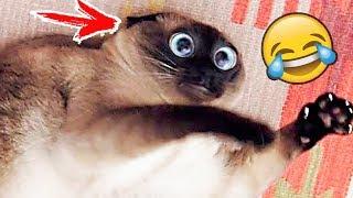 Я РЖАЛ ПОЛ ЧАСА | Приколы с Животными 2019 | Смешные Коты и Собаки