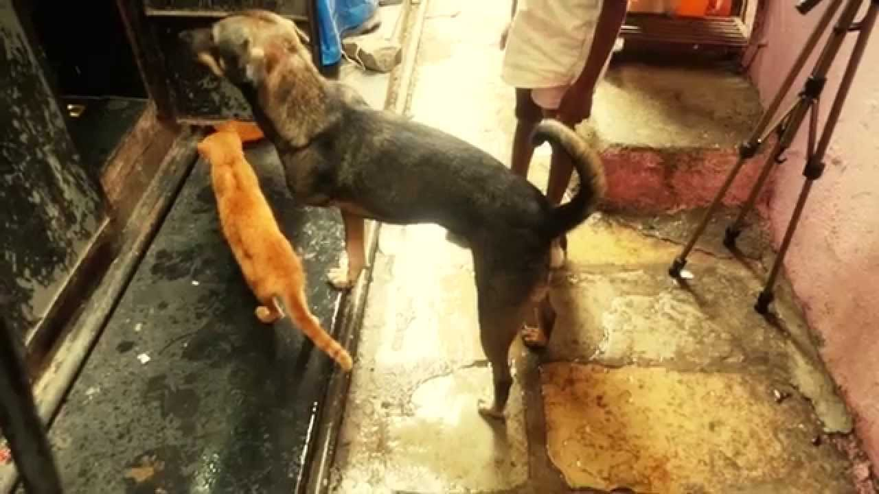 Download Animal Cat, Dog Video Documentary by Azad Jain