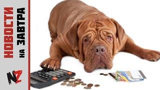 В Якутске предложили ввести налог на собак