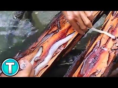 World's Weirdest Animals: Giant Shipworm Mp3