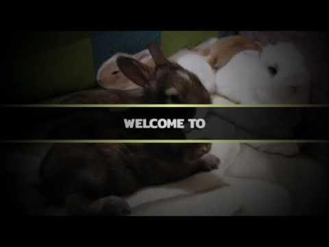 Bunny TV Intro