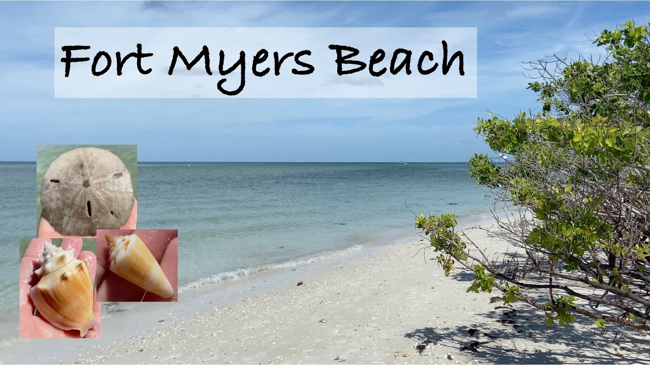 Virtual shelling - Fort Myers Beach, Florida. Shells, critters and what is inside an egg casing?