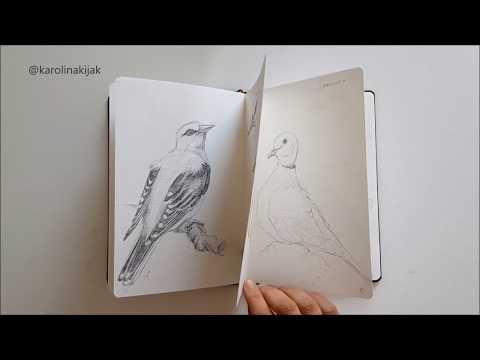 garden-birds-sketchbook,-wildlife,-animals-and-nature-pencil-drawings