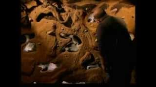 The Burrowers: Animals Underground - Episode 3