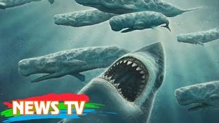 Phát hiện siêu cá mập Texas lâu đời hơn khủng long cổ đại