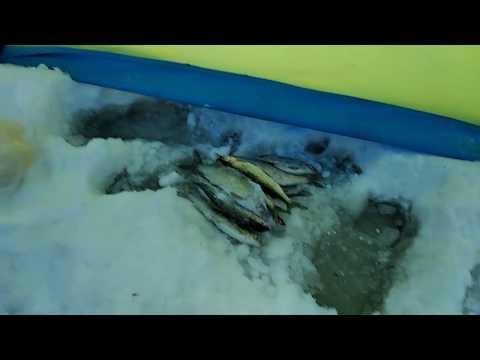 Протоки Северной Двины.Речной сиг.Вода под снегом.Хороший улов сижков