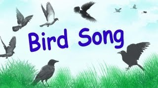 1 Hour of Relaxing Bird Songs in Wood Birds Chirping