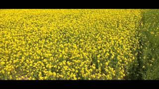 New Hindi Songs 2015 ! Dil Darbadar PK Remix ft Amir Khan