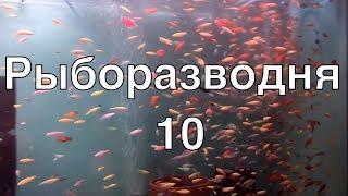 Рыборазводня в гараже, часть 10: корма и кормление