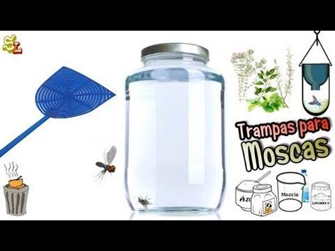 Trampas para moscas como ahuyentar y eliminar las moscas - Remedio contra las moscas ...