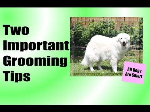 Two Important Grooming Tips